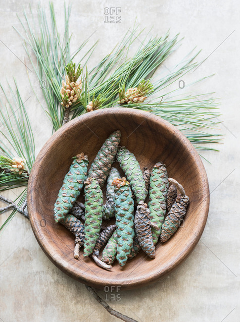 Pine cones in bowl on pine needles