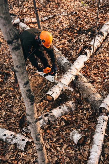 High angle view of man chain sawing tree trunk on autumn forest floor