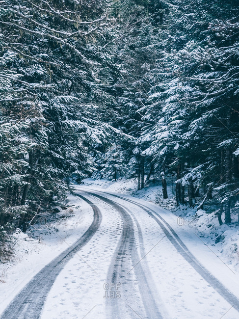 Curved road running away among coniferous trees covered with snow