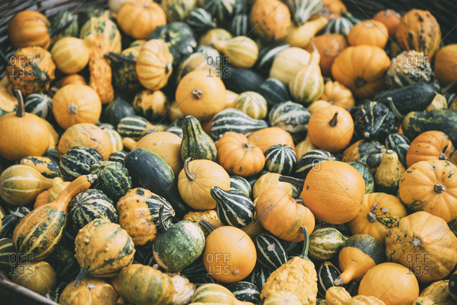 Various colorful autumn pumpkins on farm market