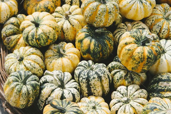 Various colorful autumn pumpkins on farm market