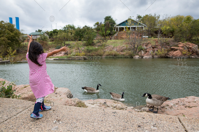 Girl tossing food to geese