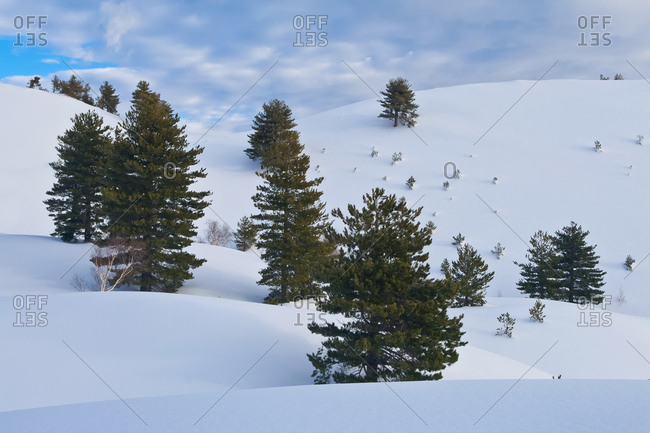 Pines of the Sartorius craters between dunes of snow, Milo, Sicily, Italy