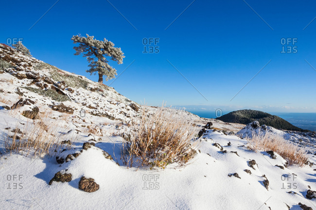 First snowfall of Monte Nero degli Zappini, in the background the crater of Mount Vetore, Nicolosi , Sicily, Italy