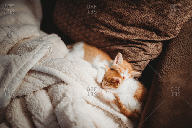 Two small orange and white kittens sleeping on sofa