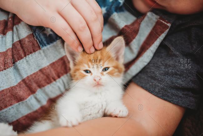 Boy petting small orange and white kitten
