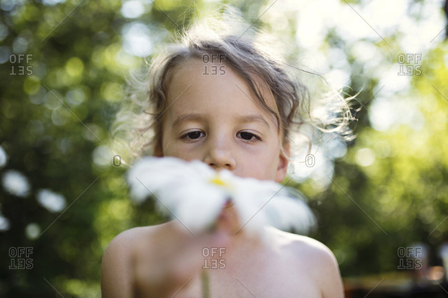 Boy looking closely at a daisy