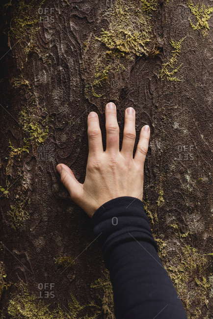 Hand touching tree trunk