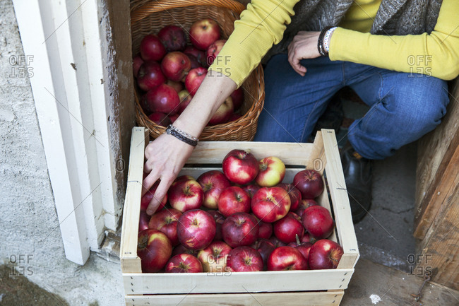 Woman putting apples into wooden crate