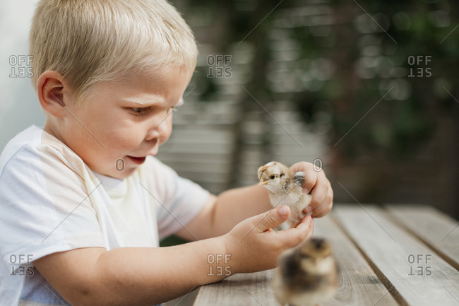 Boy playing with chick