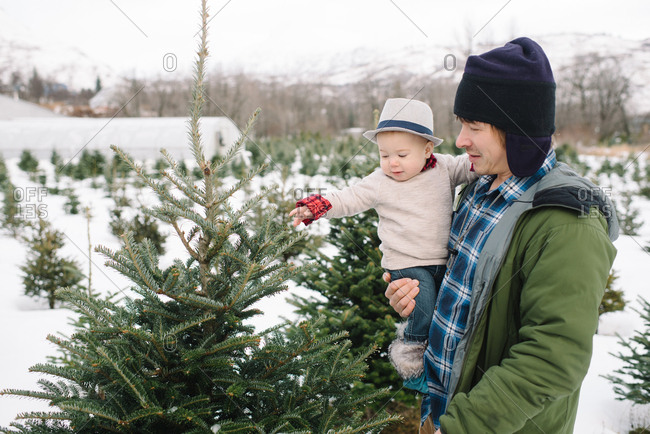 Father and baby picking out a Christmas tree at farm