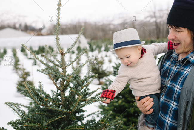 Baby touches a Christmas tree at a farm