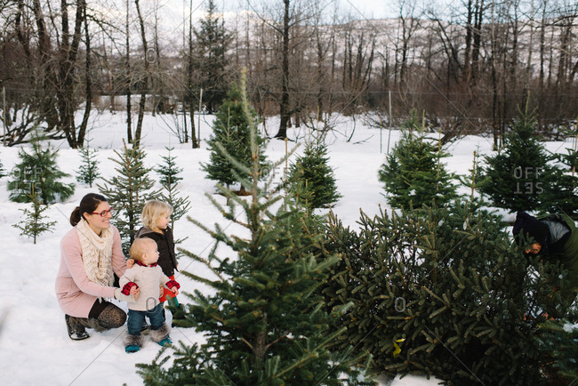 Mother with children at a Christmas tree farm