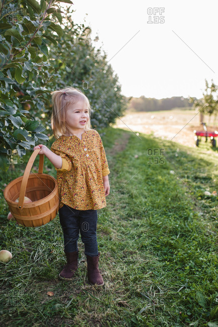 Little girl holding basket with freshly with picked apples