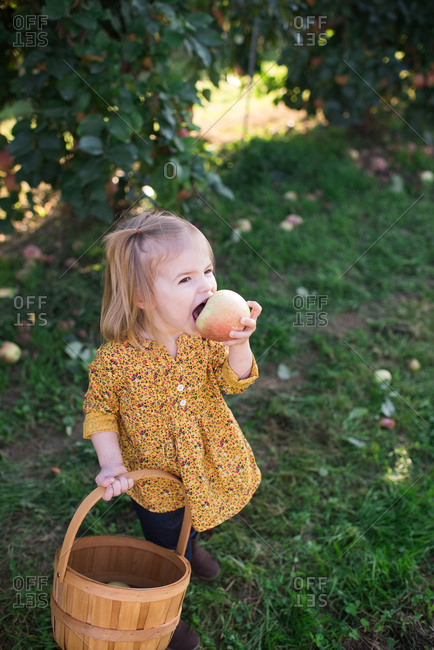 Girl holding a basket taking a bite of a freshly picked apple