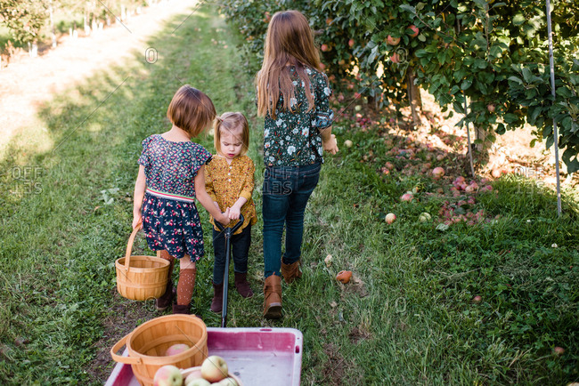 Three girls walking together in an apple orchard