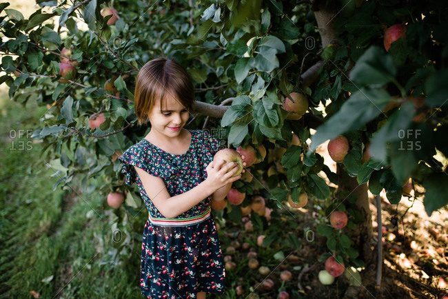 Girl holding an apple picked from a tree in the orchard