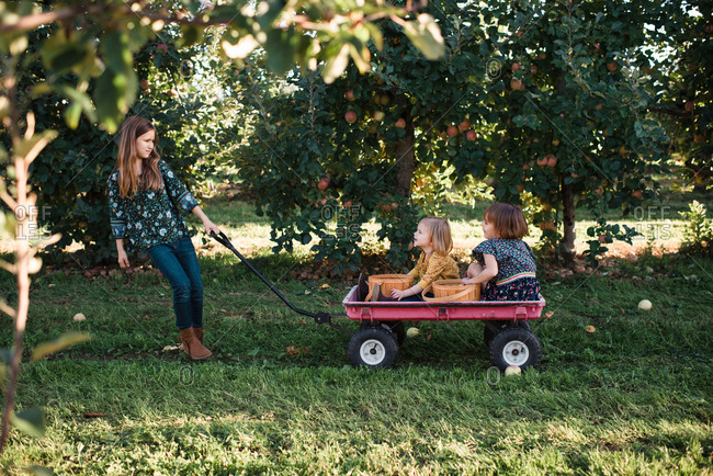 Girl pulling her sisters in a wagon through apple orchard