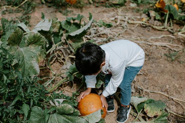 Boy choosing a pumpkin at the pumpkin patch
