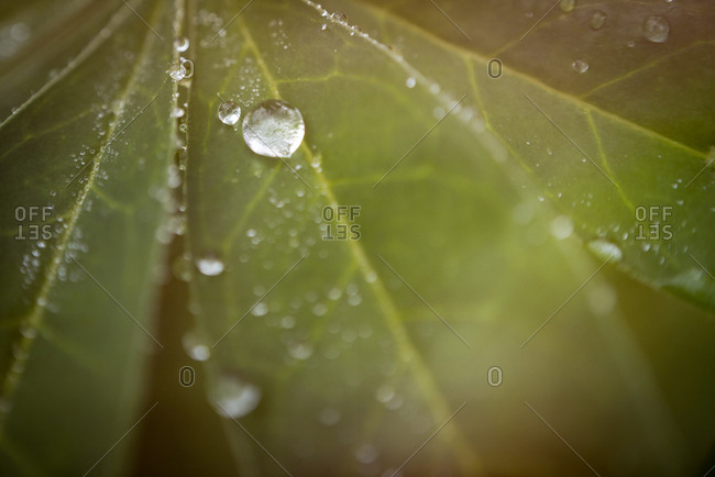 Close up of leaf and droplets