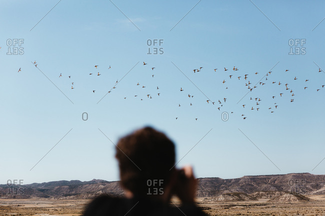 Unrecognizable man taking pictures of flying birds on sunny day in desert.