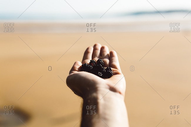 Hand of unrecognizable person holding blackberry on sandy beach at seaside.