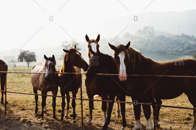Herd of horses standing at fence in paddock in mountains.