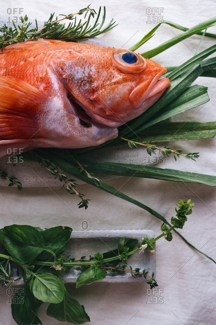 Raw red scorpion fish, with rosemary and thyme, On stone table. Bake ready for baking.