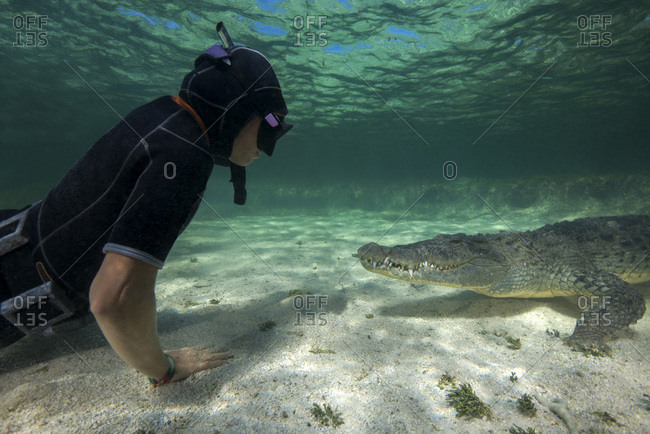 Mexico- Scuba diver watching American crocodile