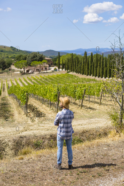 Man standing in vineyard