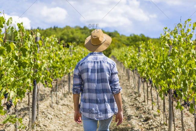Man walking in vineyard