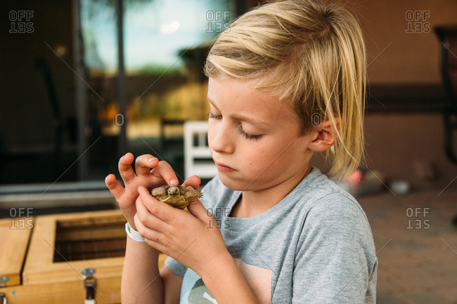 Boy taking a close look at a turtle