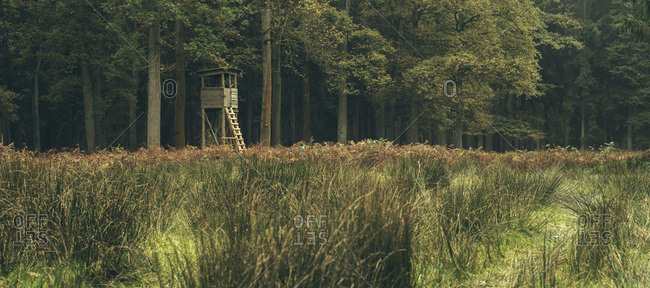 Hunting high seat in deciduous forest in autumn in a wildlife park in Dulmen, Germany