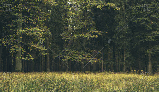 Meadow in deciduous autumn forest in a wildlife park, Dulmen, Germany
