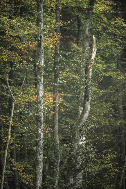 Tree trunks and foliage in autumn forest