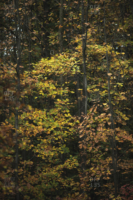 Colorful trees in deciduous forest with autumn foliage
