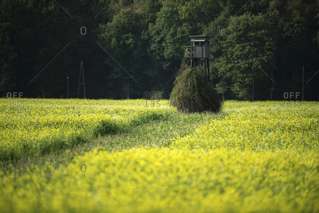Hunting post in field with yellow flowers