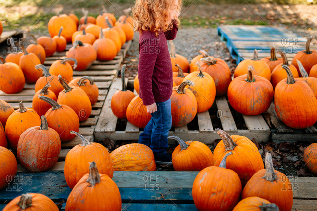 Picking out pumpkins
