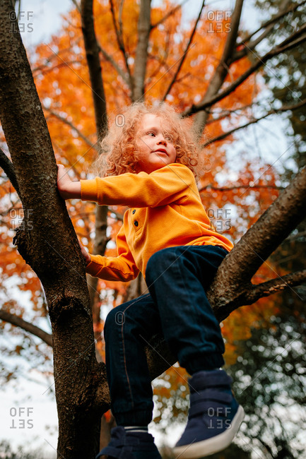 Child sitting in tree