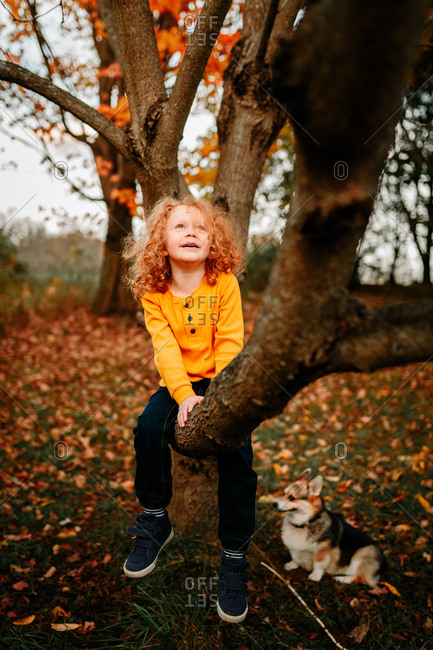 Child sitting in tree