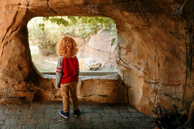 Child looking at tiger at zoo