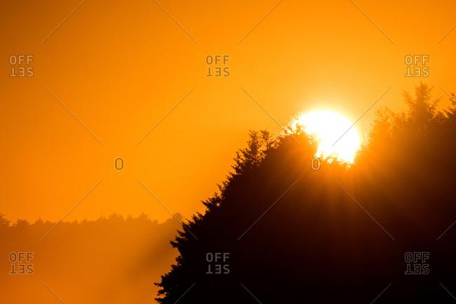 Orange sunset over trees