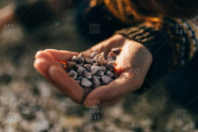 Close-up hand of person holding small shells in nature