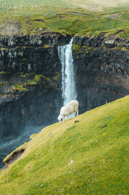 Sheep pasturing in highlands