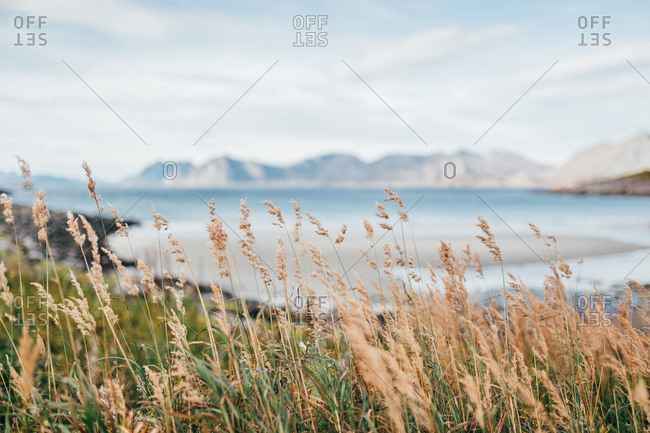Spike grass swinging in wind on highland on background of breathtaking view of lake and mountains