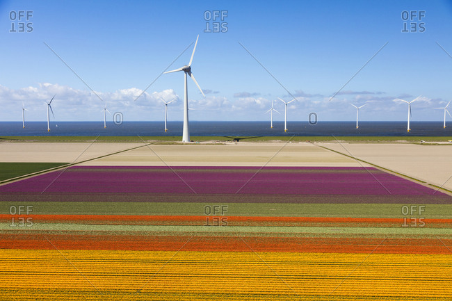 May 3, 2016: Aerial view of the tulip fields in North Holland, The Netherlands