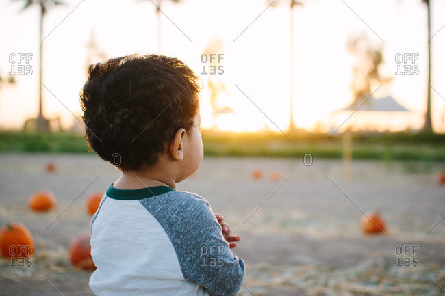 Toddler boy looking at pumpkins in a pumpkin patch