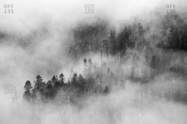Dense fog covering hillside forest in black and white