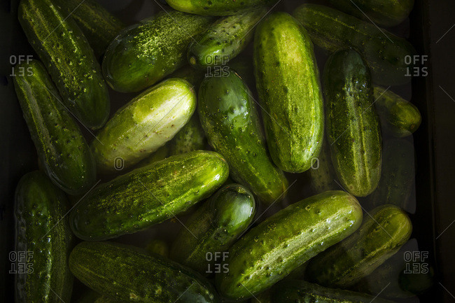 Heap of cucumbers