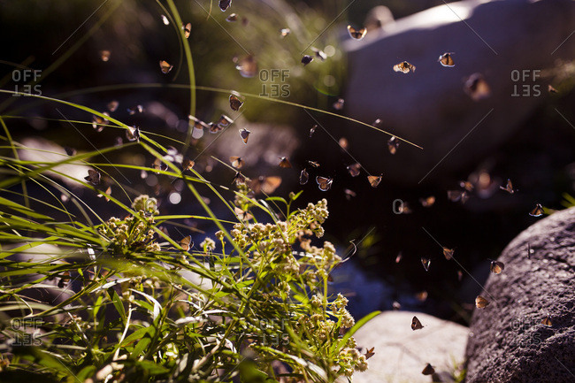 Moths flying above outdoor plants